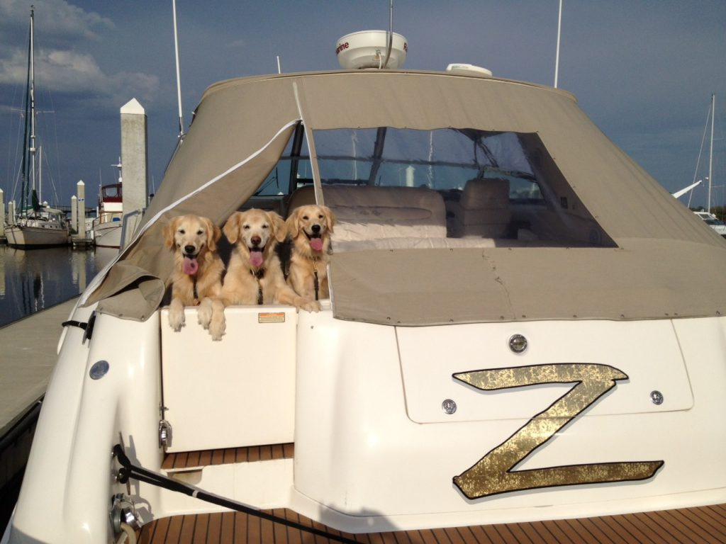 The Dogs love yachting too!